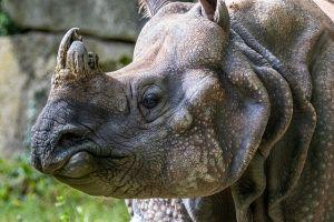 Küzdelem a veszélyeztetett vadakért