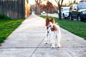 Miért nem akar sétálni?