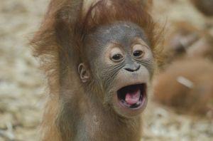 Boldogság az állatkertben