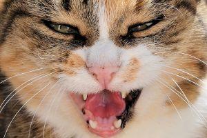 Egy macska okozta a járat kalamajkáját