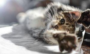 Szorult helyzetbe került egy cica Debrecenben