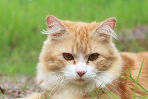 Megihletnek a cicák