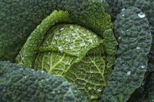 Vitaminbomba a káposztában