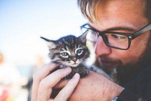 A macskás férfiak nem vonzók