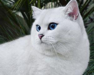 A szeme miatt lett híres