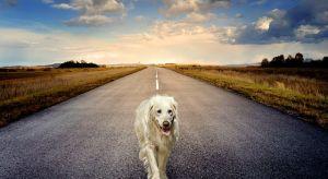 Egy jó megoldás sok gazdi és kutyája számára