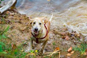 Részleges tilalom és kutyasétáltatás