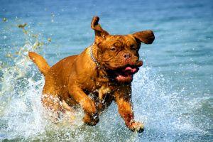 A tíz legnépszerűbb kutyafajta